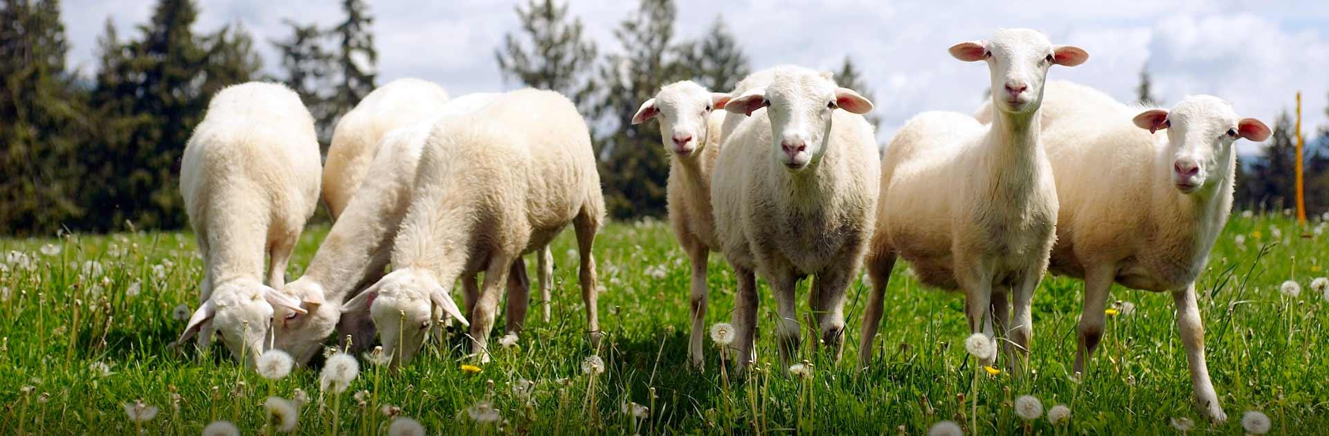 beeffarm Agrotrainee - Ukrainian agro practicants in Europe